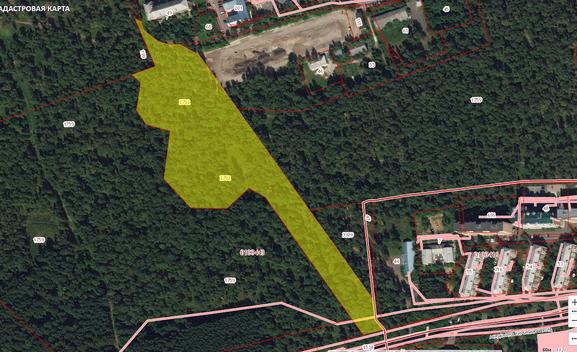 Сценарии развития березовой рощи Студгородка в Красноярске – на что тратятся бюджетные средства